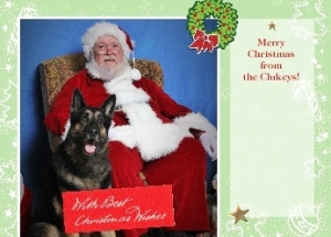 Bolo Christmas Card